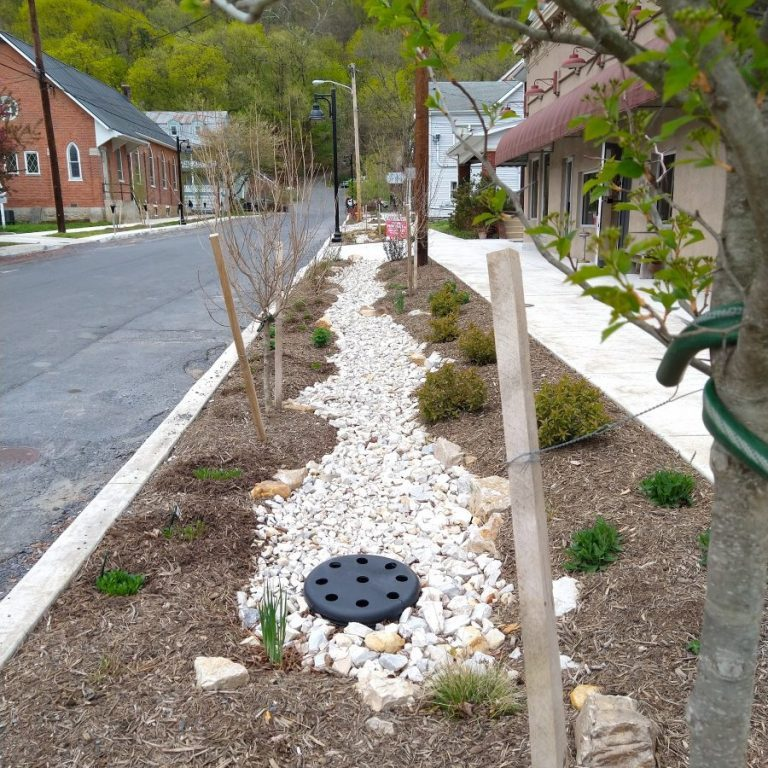 One of three rain gardens installed on Congress Street as part of flood control and sidewalk improvements.